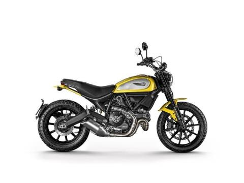 2015 Ducati Scrambler Icon in Orlando, Florida
