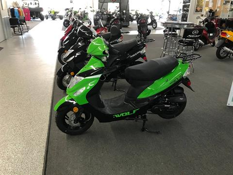2021 Wolf Brand Scooters RX50 in Coloma, Michigan - Photo 1