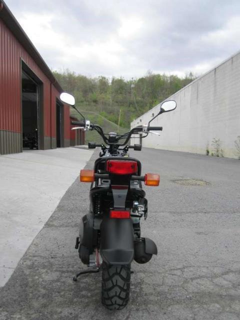 2015 Honda Ruckus® in Tyrone, Pennsylvania