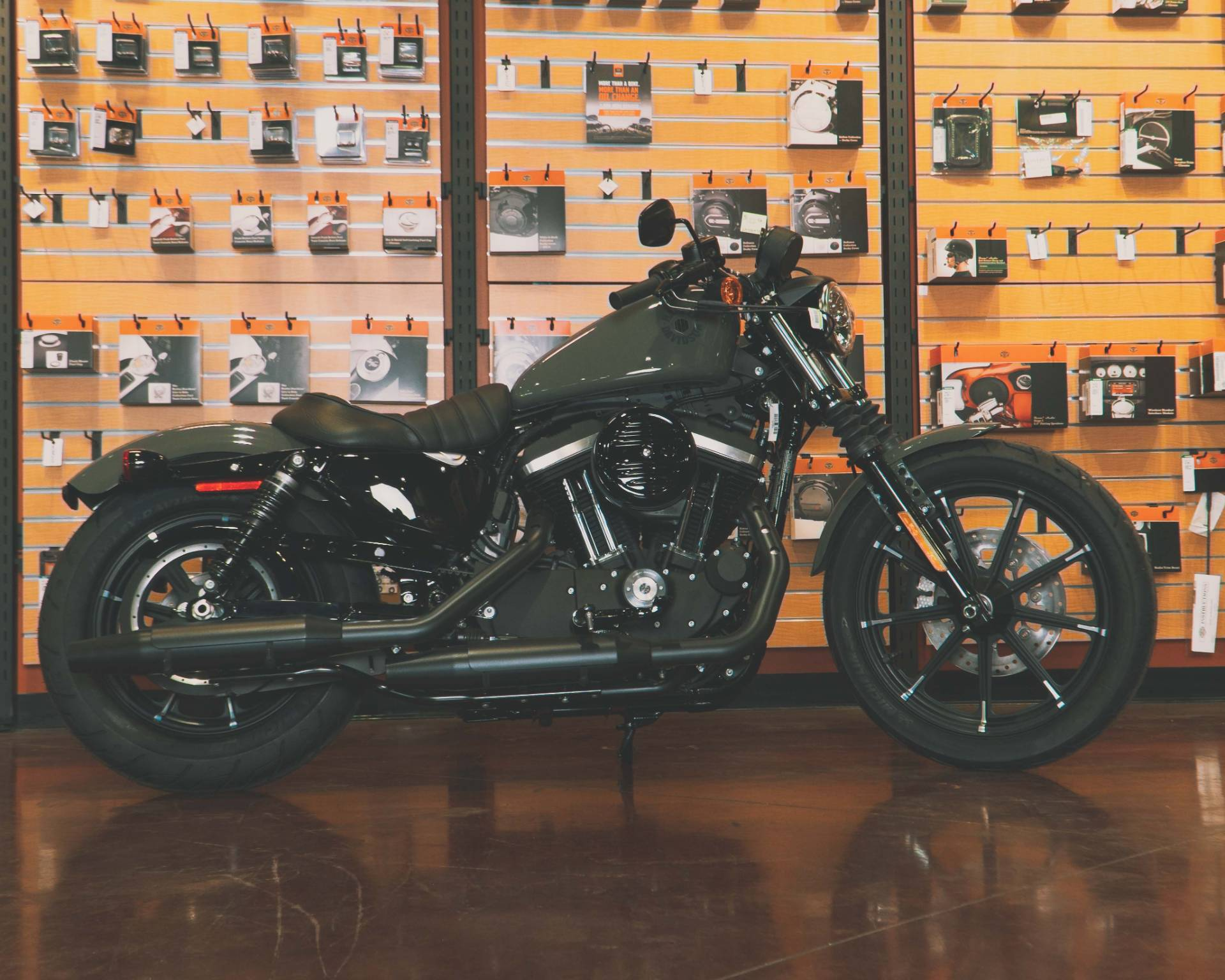 2021 Harley-Davidson XL883N in Mount Vernon, Illinois - Photo 1