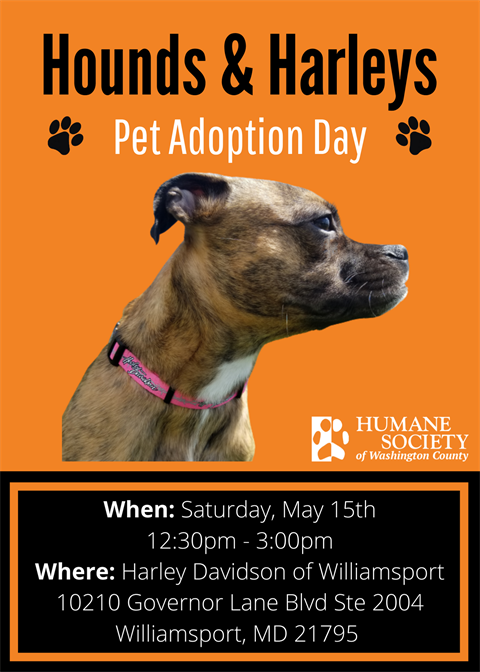 Hounds and Harleys Pet adoption day