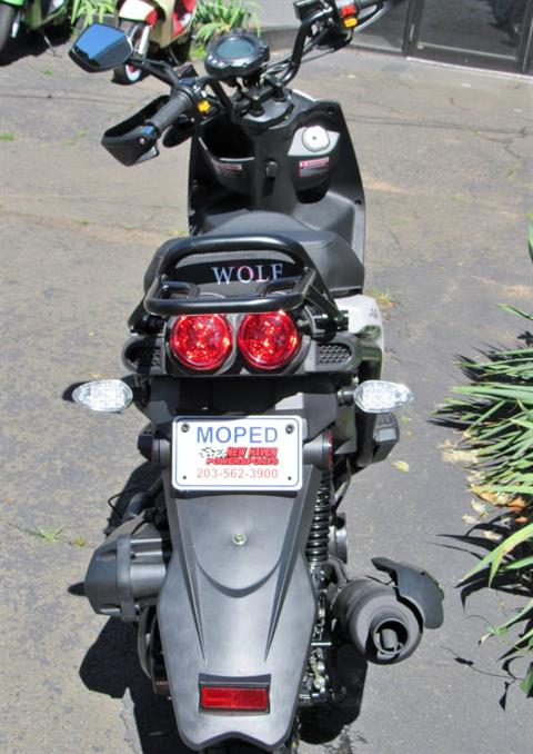2019 Wolf Brand Scooters RUGBY 50 in New Haven, Connecticut
