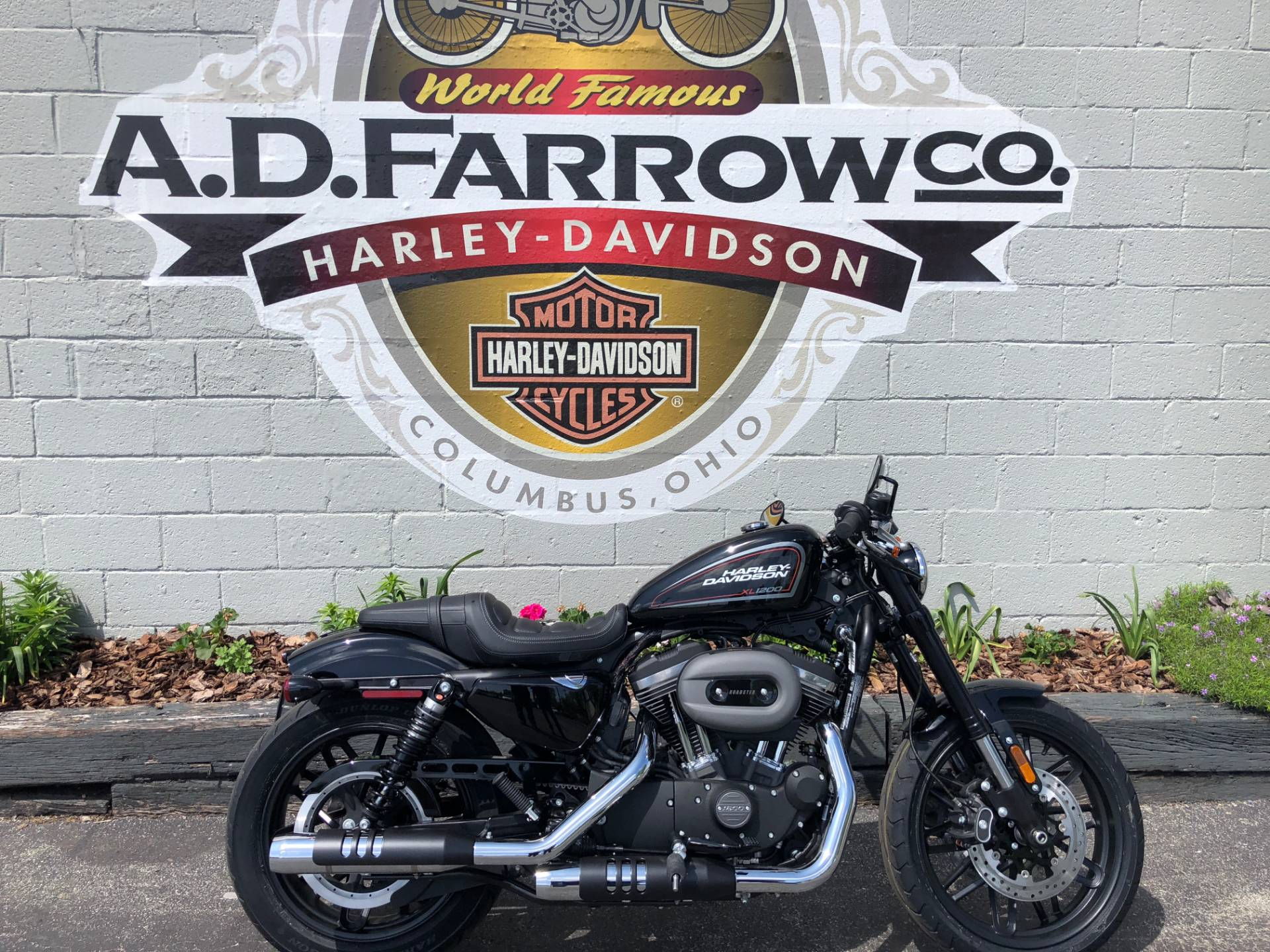 2019 Harley-Davidson Roadster™ in Sunbury, Ohio - Photo 1