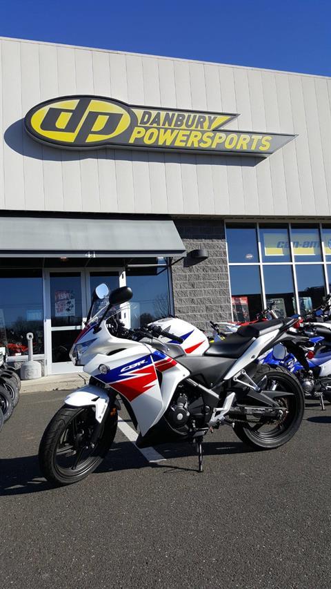 2013 Honda CBR®250R in Danbury, Connecticut