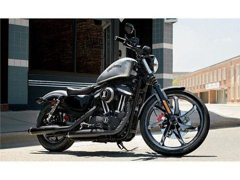 2015 Harley-Davidson Iron 883™ in Loveland, Colorado - Photo 3