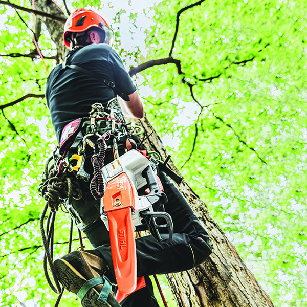Stihl MSA 161 T Chainsaw in Kerrville, Texas - Photo 2